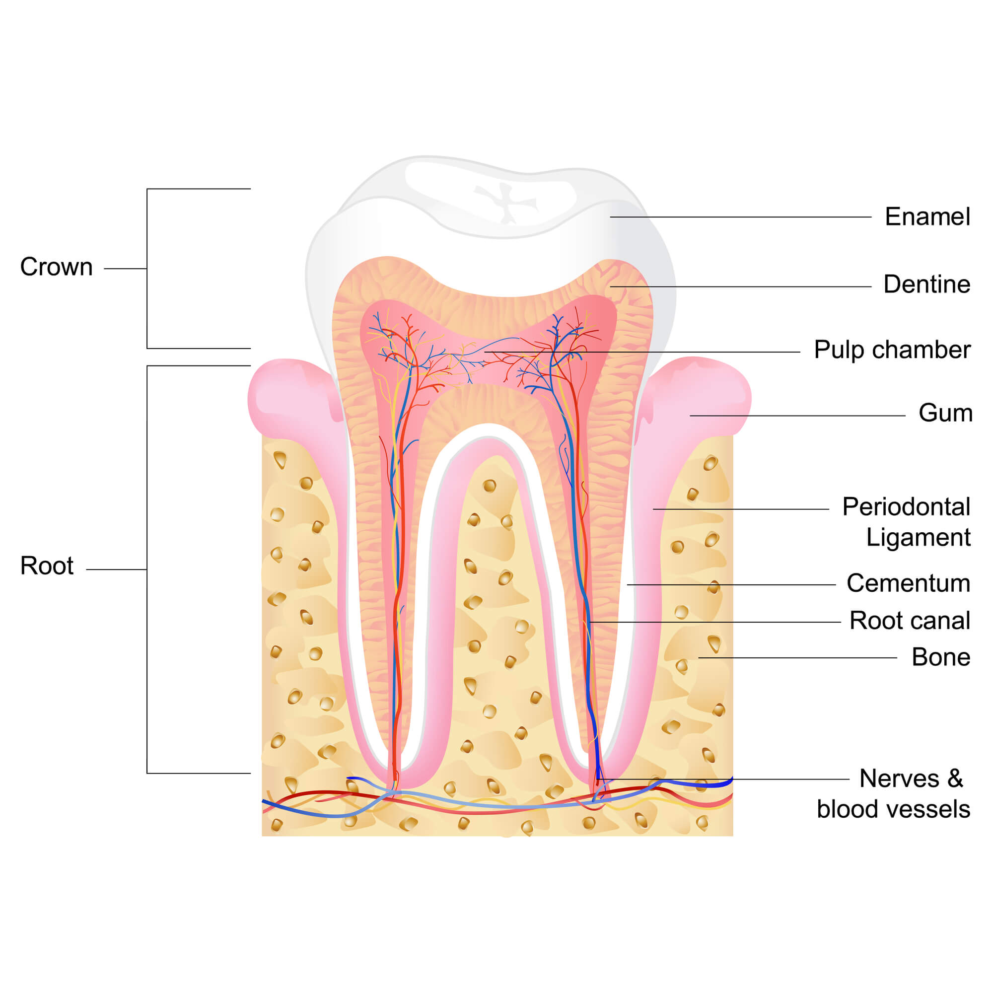 Where to get the best endodontic microsurgery mechanicsville?